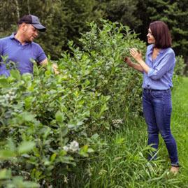 plantacja borowki doradzrtwo