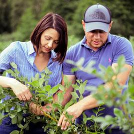 uprawa borowek doradztwo